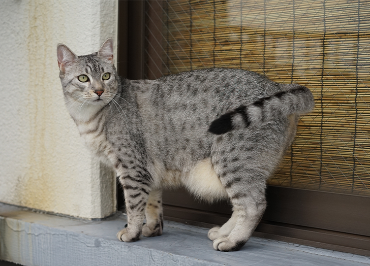 The Best Cat Breed for Your Zodiac Sign