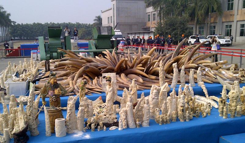 Delay on full ban of ivory trade in Hong Kong could encourage elephant poaching, study shows