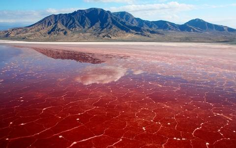 Spirulina on Lake Natron - Credit: Paul & Paveena Mckenzie/Getty Creative