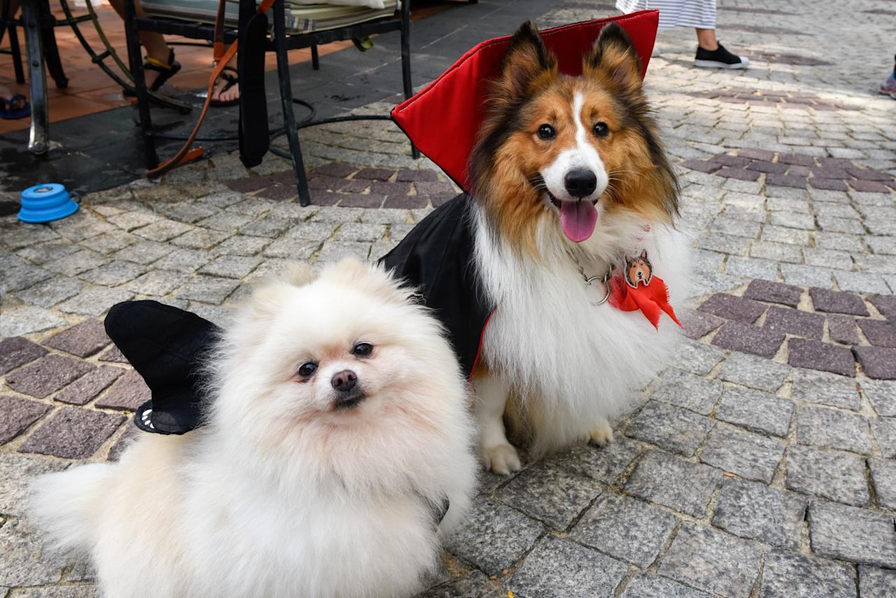 <p>A Pomeranian and second-prize winner Mango the Sheltie at Howlloween at the Grand Copthorne Waterfront Hotel. (Photo: Bryan Huang/Yahoo Lifestyle Singapore)</p>