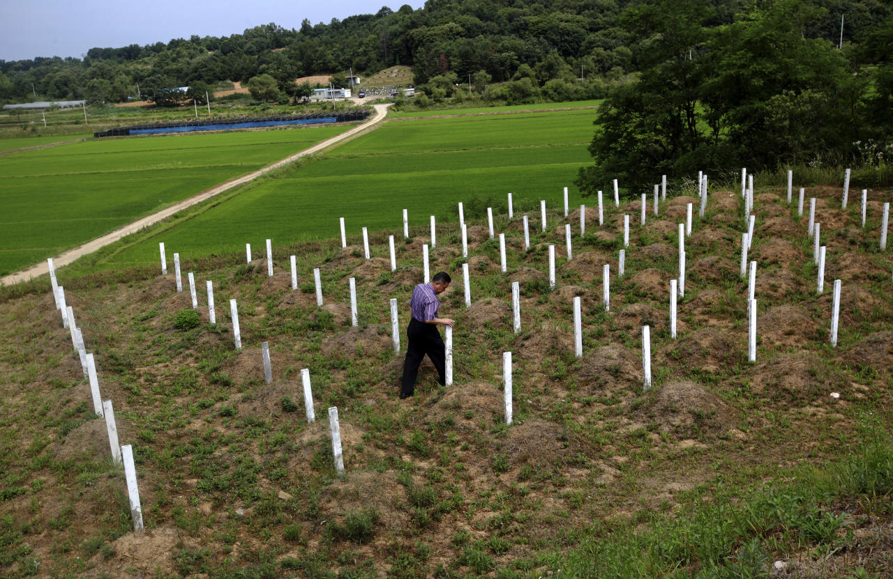 """In this Thursday, June 28, 2012 photo, local resident Kim Dong-hun inspects the wooden grave markers at the """"enemy cemetery,"""" where North Korean and Chinese soldiers who died in the Korean War are buried, just south of the Demilitarized Zone in Paju, South Korea. Hundreds of identical wooden grave markers poke out of the grass on a hill surrounded by rice paddies and trees, North Korea's dark mountains visible in the distance. Some are rotting; some have been knocked to the dirt; most have no names. (AP Photo/Hye Soo Nah)"""