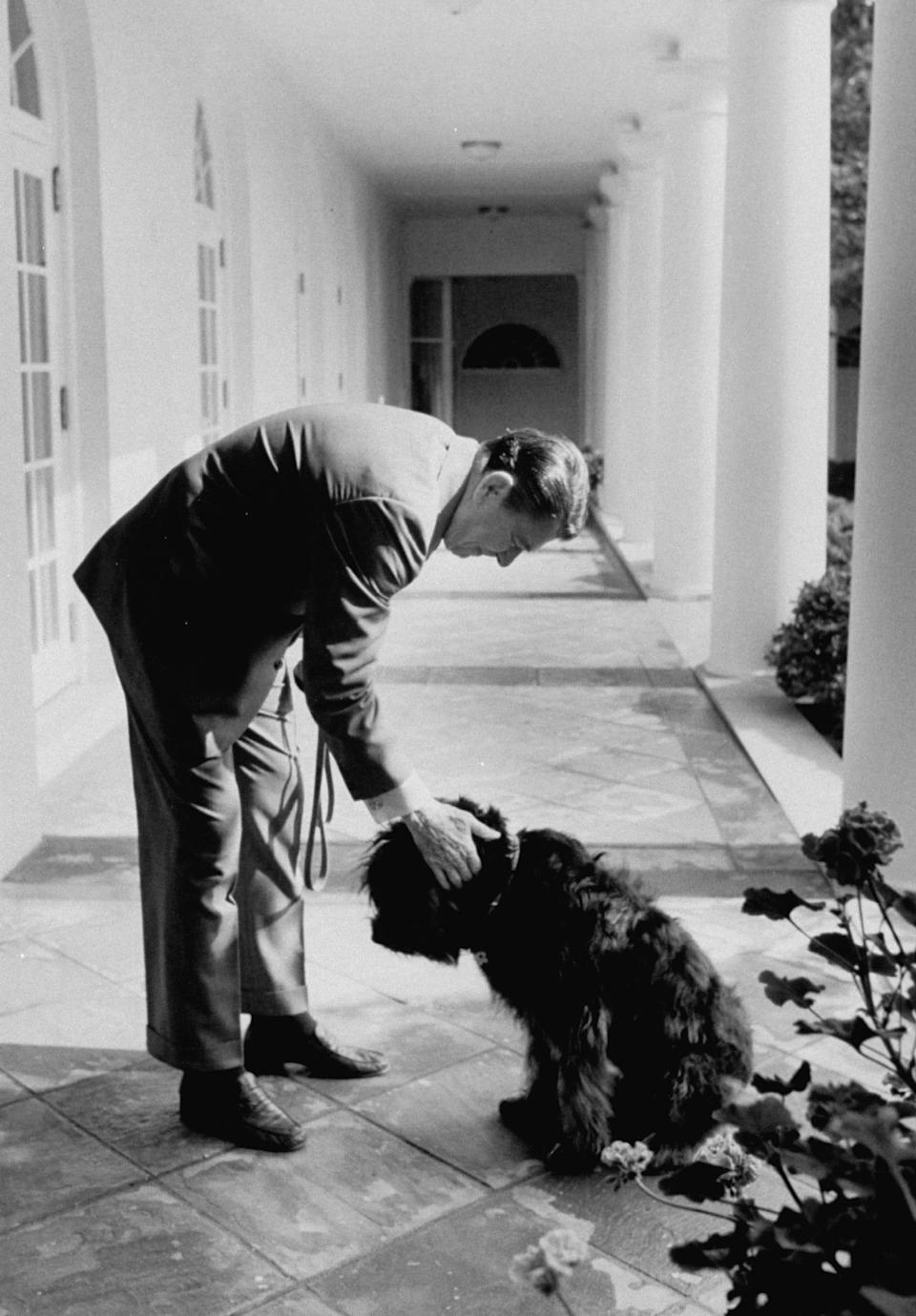 ronald reagan with dog lucy