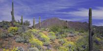 """<p><strong>Best for Avid Golfers</strong></p><p>Phoenix and Scottsdale are known for their world-class golf courses, including two Jay Morrish-designed courses beside stunning rock formations at the Boulders resort and the Adobe and Links courses at the historic Biltmore. </p><p>The Sonoran desert heat can get intense, so after your round, be sure to take a refreshing dip in the pool! </p><p><strong><em>Where to Stay: </em></strong><a href=""""https://go.redirectingat.com?id=74968X1596630&url=https%3A%2F%2Fwww.tripadvisor.com%2FHotel_Review-g31181-d73240-Reviews-Boulders_Resort_Spa_Curio_Collection_by_Hilton-Carefree_Arizona.html&sref=https%3A%2F%2Fwww.countryliving.com%2Flife%2Fg37186621%2Fbest-places-to-experience-and-visit-in-the-usa%2F"""" rel=""""nofollow noopener"""" target=""""_blank"""" data-ylk=""""slk:Boulders Resort & Spa"""" class=""""link rapid-noclick-resp"""">Boulders Resort & Spa</a>, <a href=""""https://go.redirectingat.com?id=74968X1596630&url=https%3A%2F%2Fwww.tripadvisor.com%2FHotel_Review-g31310-d115484-Reviews-Arizona_Biltmore_A_Waldorf_Astoria_Resort-Phoenix_Arizona.html&sref=https%3A%2F%2Fwww.countryliving.com%2Flife%2Fg37186621%2Fbest-places-to-experience-and-visit-in-the-usa%2F"""" rel=""""nofollow noopener"""" target=""""_blank"""" data-ylk=""""slk:Arizona Biltmore"""" class=""""link rapid-noclick-resp"""">Arizona Biltmore</a></p>"""