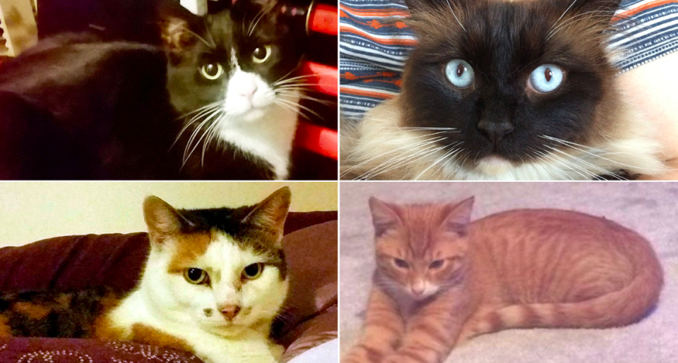 <em>The Croydon cat killer – who murdered several cats and other animals – may finally have been caught (SWNS)</em>