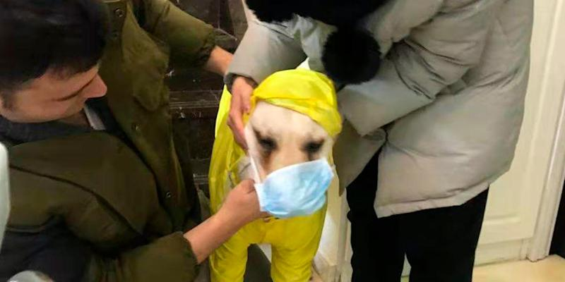 Doug Perez and his girlfriend get their dog ready for a walk in Wuhan
