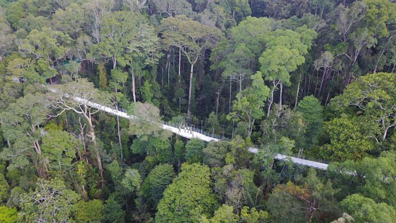 Penang Hill's 2018 bid for Unesco status boosted by findings of world's first whole-forest biodiversity survey