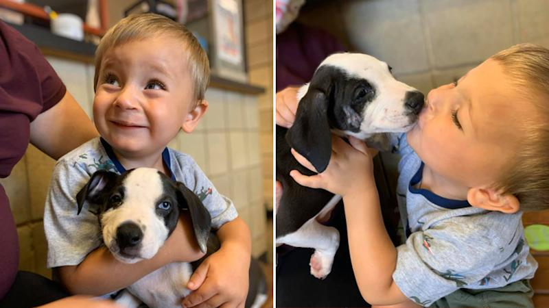 Bentley Boyers with a cleft lip adopts a dog with a cleft lip