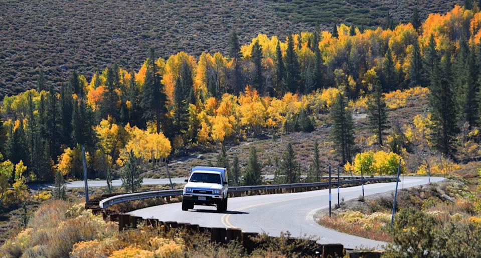 Virginia Lakes Road's colorful trees