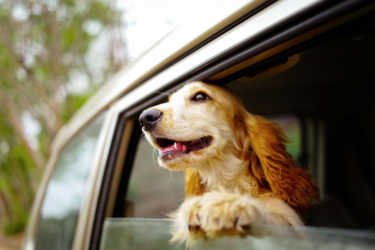 """<p>Planning a <a href=""""https://www.housebeautiful.com/travel-ideas/"""" target=""""_blank"""">vacation</a> with your furry family this summer? You're not alone: More than 77 percent of U.S. travelers plan to take their pets along on a car trip this season, according to a <a href=""""https://www.prnewswire.com/news-releases/orbitz-travel-survey-shows-three-in-four-vacationers-are-planning-a-road-trip-for-their-pets-this-summer-300873384.html?tc=eml_cleartime"""" target=""""_blank"""">survey</a> by leading travel site <a href=""""https://www.orbitz.com/"""" target=""""_blank"""">Orbitz.com</a>. To help you have the very best time with your very best friend, the team at Orbitz has put together an interactive map of <a href=""""https://www.orbitz.com/blog/dogfriendlyroadtrips/"""" target=""""_blank"""">seven """"woof-worthy"""" road trips</a> across the country, each one full of fun things to do and places to go with your <a href=""""https://www.housebeautiful.com/content/dogs/"""" target=""""_blank"""">canine companion</a>. (The survey also found that hotel searches using Orbitz's pet-friendly filter are up 40 percent year-over-year, so be sure to book ahead at a <a href=""""https://www.housebeautiful.com/lifestyle/kids-pets/g27042334/best-dog-friendly-hotels/"""" target=""""_blank"""">dog-friendly hotel</a>—there are great ones in every single state!) It's time to grab that leash and hit the open road.<br></p>"""
