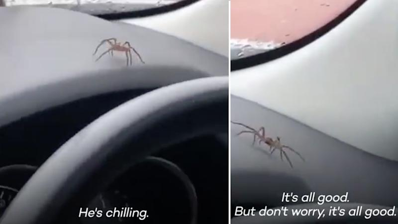 The huntsman that started crawling around a car on the gold coast