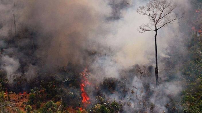 Amazon forest fires in 2019 led to global protests