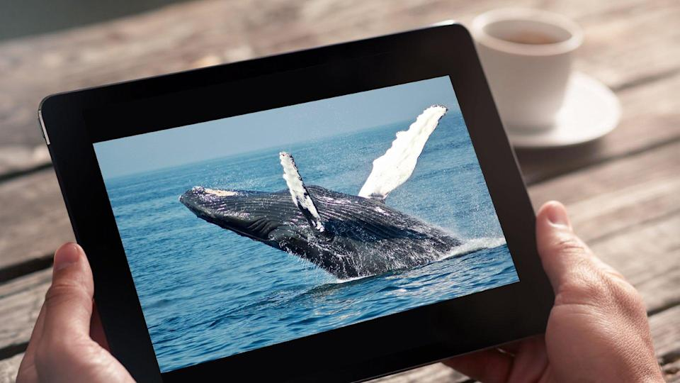 YouTube has a wealth of ocean-related edutainment and we've handpicked some of the best for your viewing pleasure - they're whale-y good!