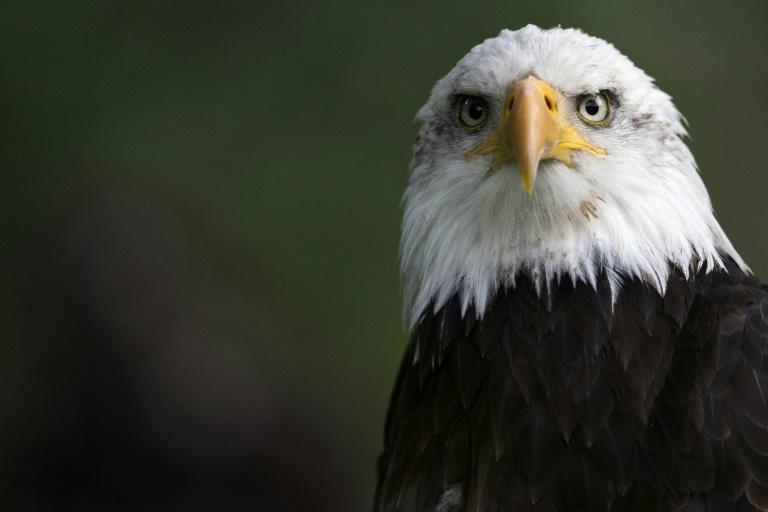 An African fish eagle. The illegal trade in animals is worth nearly $20 billion each year, according to Interpol