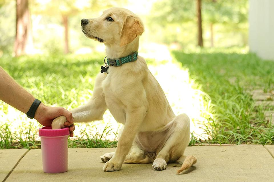 The Mudbuster helps clean your dogs paws with ease. (Image via Amazon)