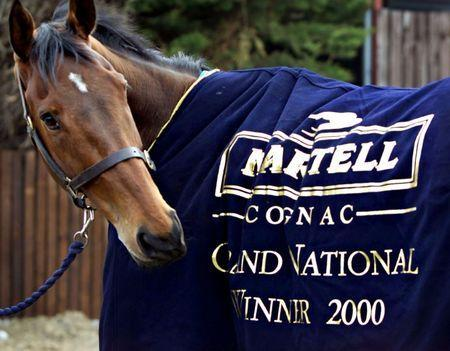 FILE PHOTO: Grand National winner, Papillon examines his victors rug in his homeyard in Kill, County Kildare, April 9. Papillon, trained by Ted Walsh and ridden by his son Ruby won the Grand National at Aintree, giving a second successive victory to the Irish.