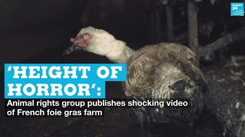 'Height of horror': Animal rights group publishes shocking video of French foie gras farm