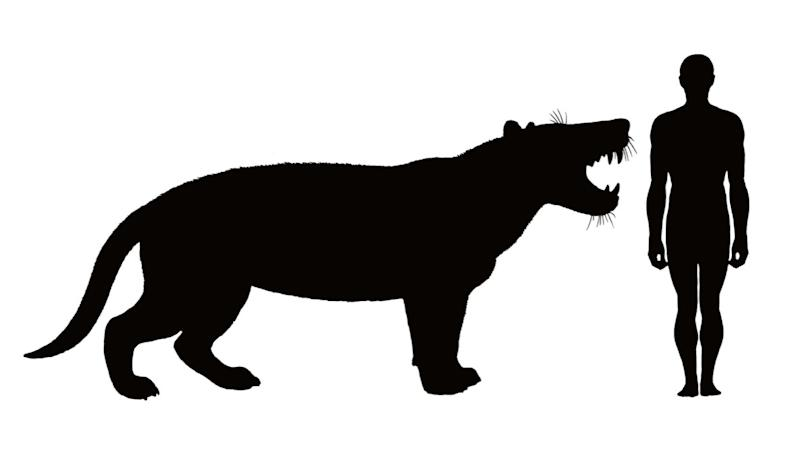 The meat-eating beast was larger than a polar bear and had a skull bigger than a rhinoceros (SWNS)