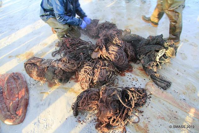 All the plastic and rope debris found in the whale's stomach (Photo: Scottish Marine Animal Strandings Scheme)