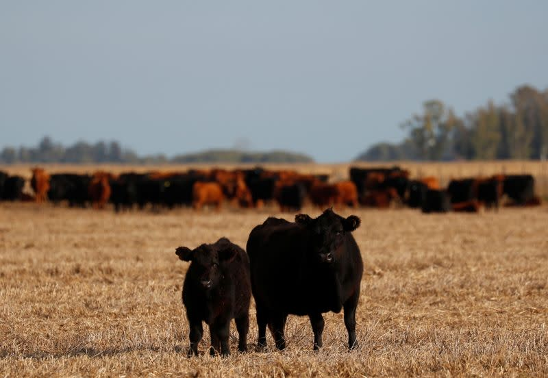 High beef prices squeeze carnivores from Buenos Aires to New Orleans