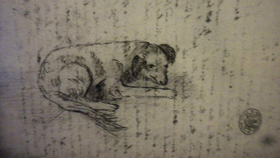 Pencil sketch of Tray, by Mary Anning