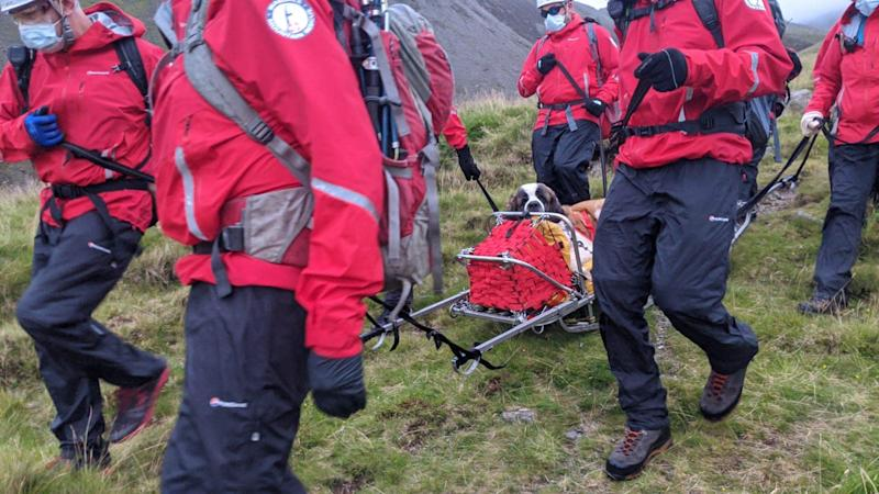 Daisy, the 55kg St Bernard was rescued from Scafell Pike, after she collapsed and refused to move. Source: Facebook/Wasdale Mountain Rescue Team