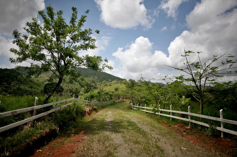 In this May 22, 2012 photo, a road crosses through an agricultural area of a forest in San Francisco de Macoris, Dominican Republic. Conservationists are establishing a sanctuary that they say will be like no other in the Dominican Republic, blending sustainable agriculture with preservation on former pasture land at the edge of a cloud forest that will help protect a songbird called Bicknell's thrush which migrates each year from the northeastern U.S. and southern Canada. (AP Photo/Ricardo Arduengo)