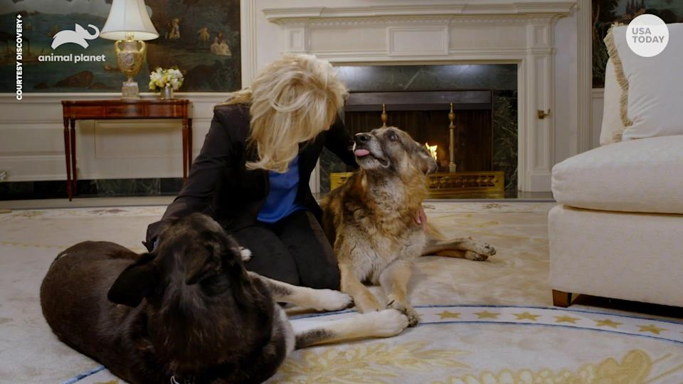 Woof First Lady Jill Biden And Dogs Champ And Major Star In Face Mask Psa For Puppy Bowl