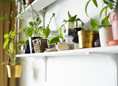 Should I Sing to My Plants?' and Other Common Houseplant Questions