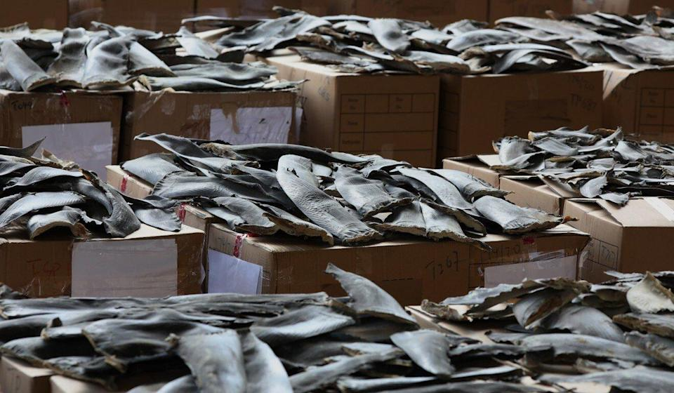 In late April and early May of 2020, about 13 tonnes of dried shark fins from protected species was seized by customs officers. Photo: Nora Tam