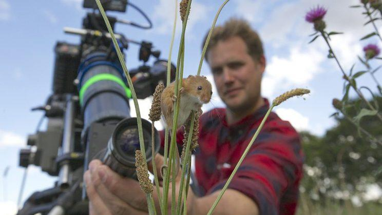 Planet Earth II picked up best factual programme