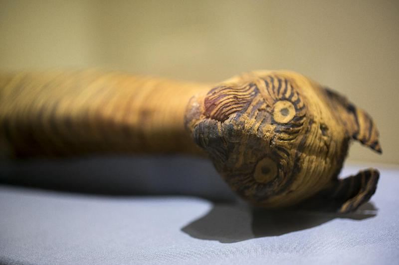 "In this March 20, 2014 photo, a cat mummy, is displayed as part of the exhibit ""Soulful Creatures: Animal Mummies in Ancient Egypt,"" at the Orange County's Bowers Museum in Santa Ana, Calif. The exhibition is on the ancient the mummification of animals in the Egyptian culture and religion. Drawn from the renowned collections of the Brooklyn Museum, Soulful Creatures features choice examples from among the many millions of mummies of birds, cats, dogs, snakes, and other animals preserved from at least thirty-one different cemeteries throughout Egypt. (AP Photo/Damian Dovarganes)"