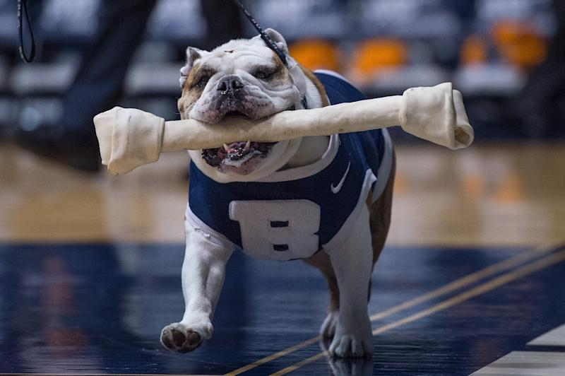 Michael Kaltenmark, Butler's mascot handler, received a surprise visit from their bulldog in the hospital on Friday after undergoing a kidney transplant. (Zach Bolinger/Icon Sportswire)