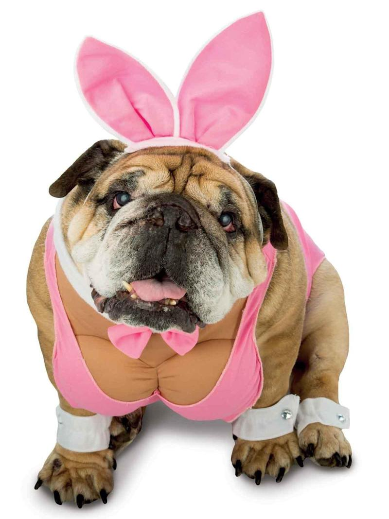 """Hugh Hefner's recent death may inspire a whole rash of Halloween Playboy bunnies, but none of them hold a carrot to having <a href=""""https://www.costumesupercenter.com/products/zelda-hunny-bunny-pet-costume"""" target=""""_blank"""">a canine be your playmate.</a> It's the most cuddly form of patriarchal sexism we've seen this year."""