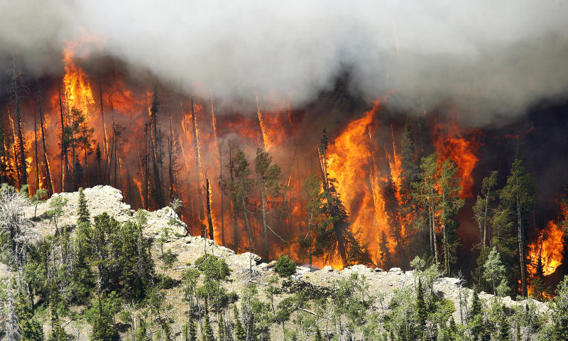 """FILE - In this June 23, 2017, file photo, the Brian Head Fire burns in Brian Head, Utah. Wildfires that have blackened more than thousands of the American West have also ignited calls, including from Interior Secretary Ryan Zinke, for thinning of forests that have become so choked with trees that they're at """"powder keg levels."""" (Stuart Johnson/The Deseret News via AP, File)"""