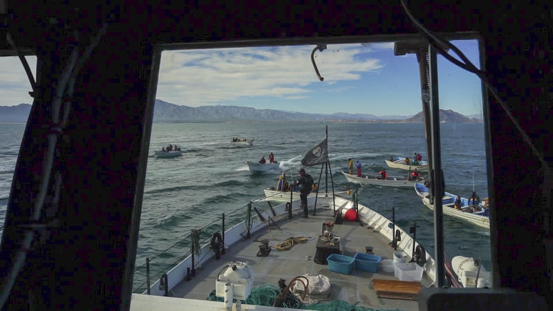 In this Jan. 9, 2019 screen grab released by the Sea Shepherd Conservation Society, the vessel Farley Mowat is surrounded by a group of small fishing boats as it was patrolling to seize illegal gill nets inside the reserve designed to protect the vaquita marina porpoise in Mexico's Gulf of California. Fishermen in the Gulf, also known as the Sea of Cortez, have long complained about environmentalists trying to protect the world's smallest and most endangered porpoise. (Alex Beldi/Sea Shepherd via AP)