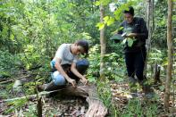 Rioterra project analyst Iara Barberena, a forestry engineer, measures dead plant matter on a parcel of Amazon rainforest in Itapua do Oeste