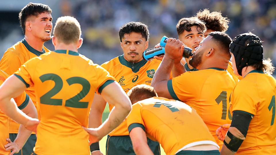 Pictured here, Wallabies look on during a Bledisloe Cup Test against the All Blacks.