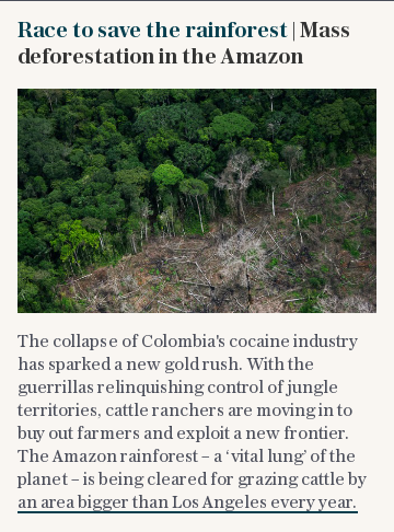 Race to save the rainforest | Mass deforestation in the Amazon
