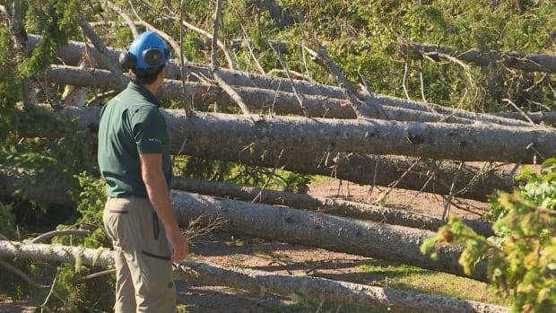 The park was one of the hardest hit areas during post-tropical storm Dorian in 2019 losingabout 80 per cent of its trees and sustainingtwo metres of coastal erosion. (Brian Higgins/CBC - image credit)