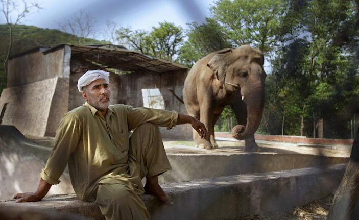 Kaavan in the enclosure in the Islamabad Zoo where he lived for three decades.