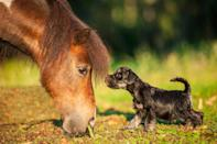 """Dogs aren't just man's best friend: They can form a close bond with practically <em>any</em> species. It doesn't matter if you're a human, a horse, a turtle, or yes, even a cat. Take the story about a <a href=""""https://bestlifeonline.com/this-incredible-story-of-a-dog-that-adopted-nine-duckling-will-melt-your-heart/?utm_source=yahoo-news&utm_medium=feed&utm_campaign=yahoo-feed"""" rel=""""nofollow noopener"""" target=""""_blank"""" data-ylk=""""slk:dog that adopted nine ducklings"""" class=""""link rapid-noclick-resp"""">dog that adopted nine ducklings</a> or these <a href=""""https://bestlifeonline.com/this-puppy-struck-up-a-friendship-with-a-tiger-cub-and-its-too-adorable-for-words-photos/?utm_source=yahoo-news&utm_medium=feed&utm_campaign=yahoo-feed"""" rel=""""nofollow noopener"""" target=""""_blank"""" data-ylk=""""slk:viral photos of puppies playing"""" class=""""link rapid-noclick-resp"""">viral photos of puppies playing</a> with lion and tiger cubs at the Beijing Wildlife Park. Dogs can love—and want to play with—just about any other animal. Not convinced? Well, we've rounded up 25 adorable photos of puppies and other animals just to remind you how loving these canine companions can be. <div class=""""number-head-mod number-head-mod-standalone""""> <h2 class=""""header-mod""""> <div class=""""number"""">1</div> <div class=""""title"""">This dog and horse running after each other</div> </h2> </div>"""