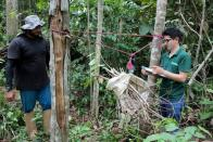 Day laborer Ivan Batista Queiroz and forestry student Mateus Sanquetta weigh tree branches on a parcel of Amazon rainforest in Itapua do Oeste