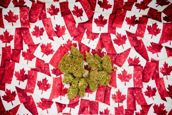 Marijuana lying on many small Canadian flags