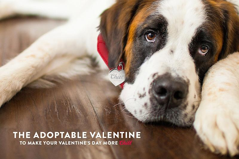 Coors Light Wants to Set You Up with the Perfect Valentine's Day Date — a Free Rescue Dog!