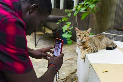 A cat looks unfazed by media attention at the Bushman Cafe venue for Ivory Coast's second smartphone movie festival