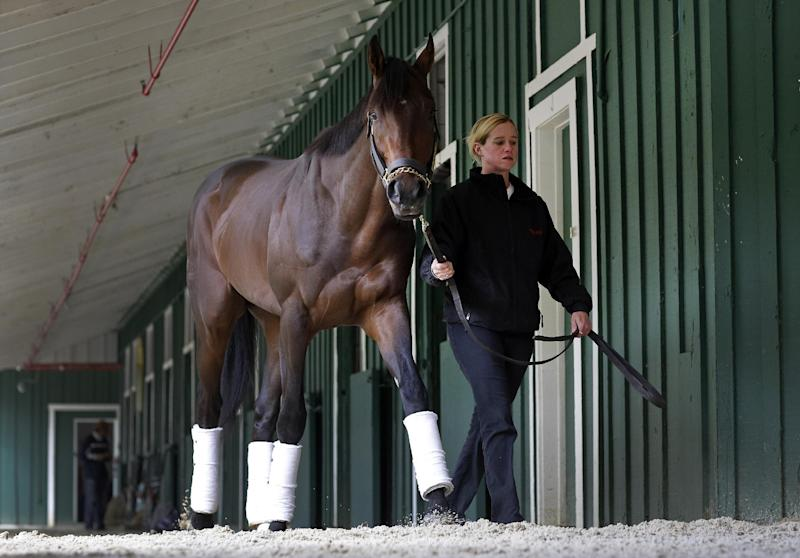 Exercise rider Jennifer Patterson walks Kentucky Derby winner Orb after arriving at Pimlico Race Course in Baltimore, Monday, May 13, 2013. Orb is scheduled to run in the Preakness Stakes on May 18. (AP Photo/Patrick Semansky)