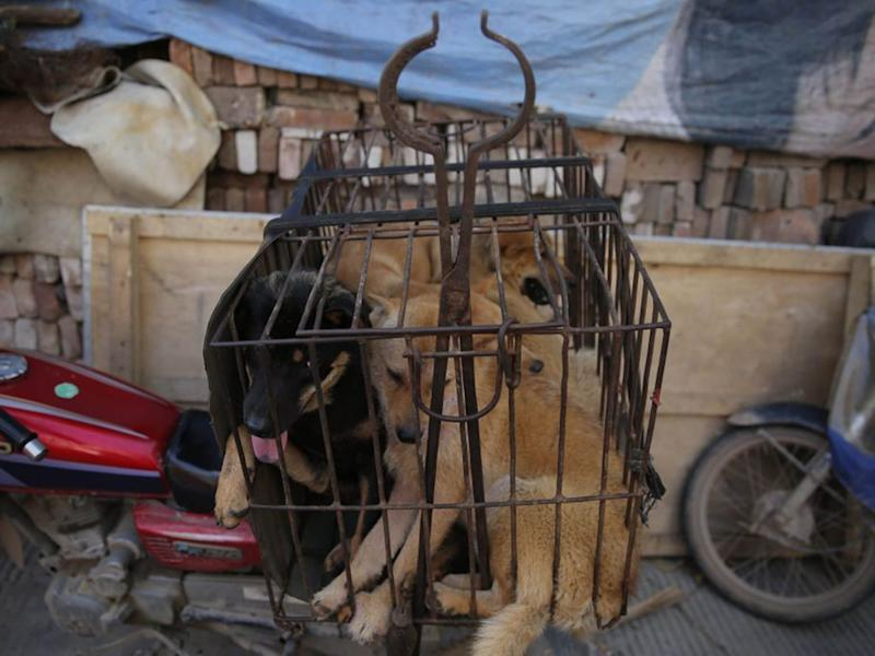 Dogs in a cage for sale at a market in Yulin city, southern China's Guangxi province, 21 June 2016: EPA