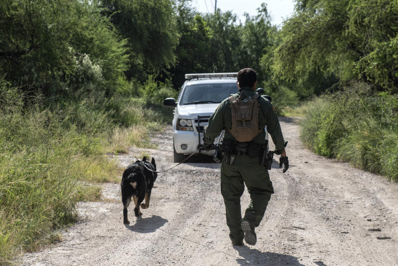 A Border Patrol K9 unit searches an area near Mission, Texas, for illegal immigrants