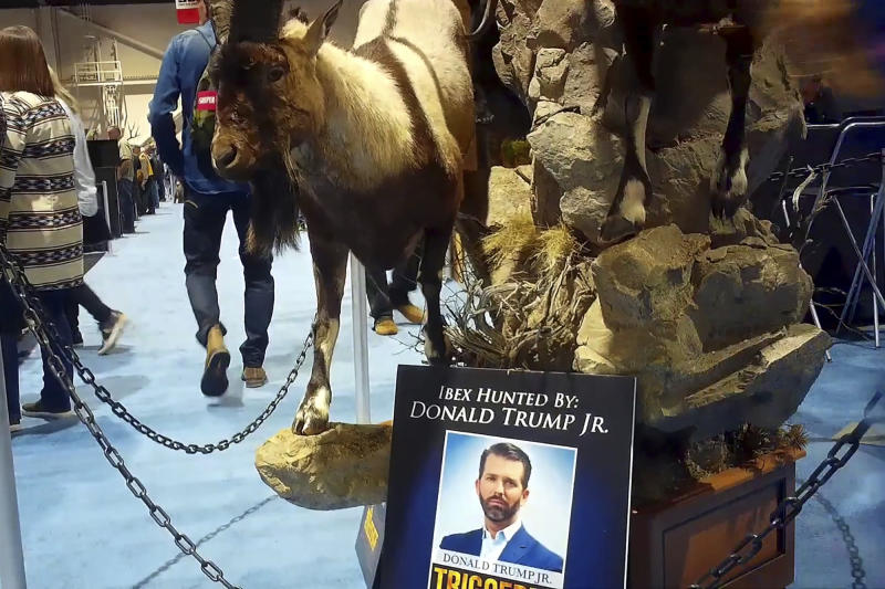 This image from video provided by the Humane Society of the United States shows taxidermy at the Safari Club International's 2020 annual convention, that was held Feb. 5-8, 2020, in Reno, Nevada. An undercover video recorded by animal welfare activists shows vendors at a recent trophy-hunting convention promoting trips to shoot captive-bred lions in Africa, despite past public assurances by the event's organizers that so-called canned hunts wouldn't be sold.  An avid hunter, Donald Trump Jr. was among the featured speakers at the SCI convention last weekend. (Humane Society of the United States via AP)