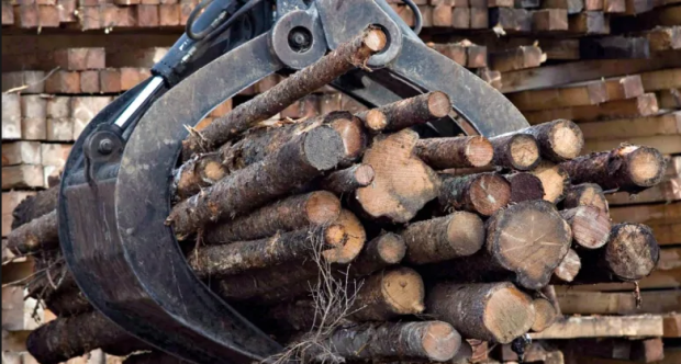 One industry that has done well during the pandemic is the lumber industry, says Green Party Leader David Coon.   (CBC - image credit)